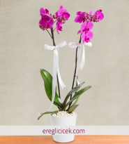 Asaletli Mor 2 Dal Orkide