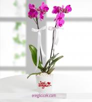 Mor ikili Orkide